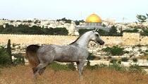 http://bedouinlifetours.com/en/wp-content/uploads/2014/06/480948_514264141945541_873980570_n1.jpg