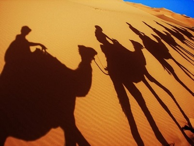 camel-amazing-photography-ship-of-the-desert-16