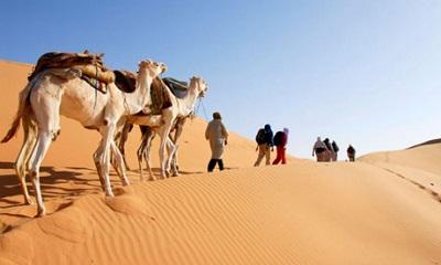 camel460x276