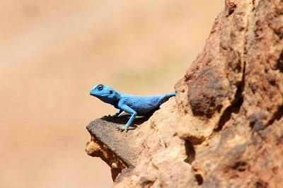 lizard_7352-1030x686
